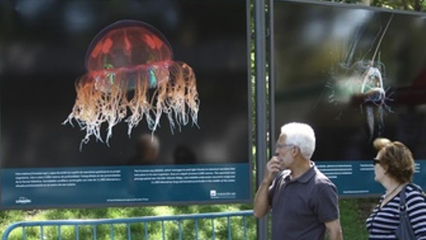 Exposición Mundo submarino en El Retiro