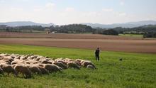 Agricultura abona varios pagos por más de 10 millones de euros en ayudas al sector agrícola y ganadero