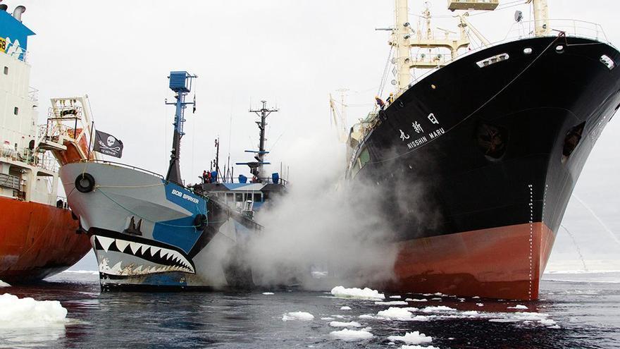 El buque 'Bob Barker', enfrentándose al pesquero 'Nishin Maru'