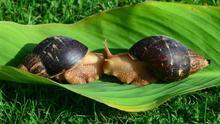 Las cosquillas del caracol