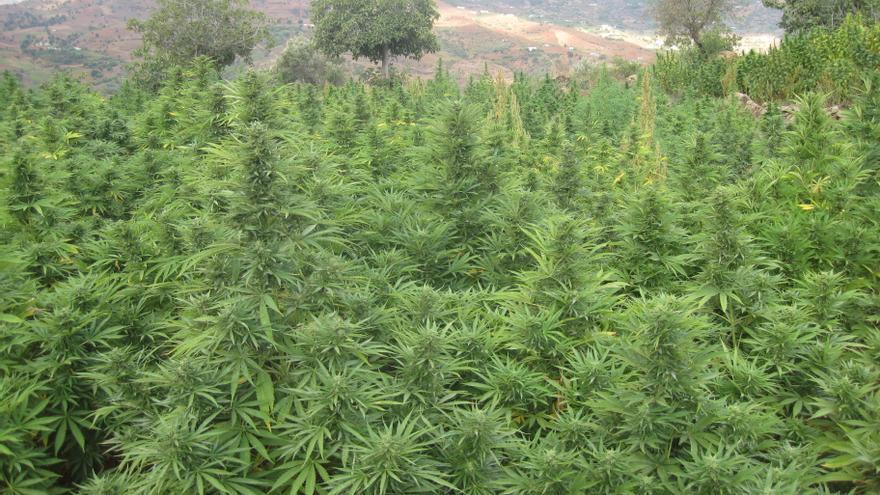 la-regulación-del-cannabis-debe-ser-ahora-pacientes-consumidores-y-empresarios-miran-con-esperanza-la-legislatura