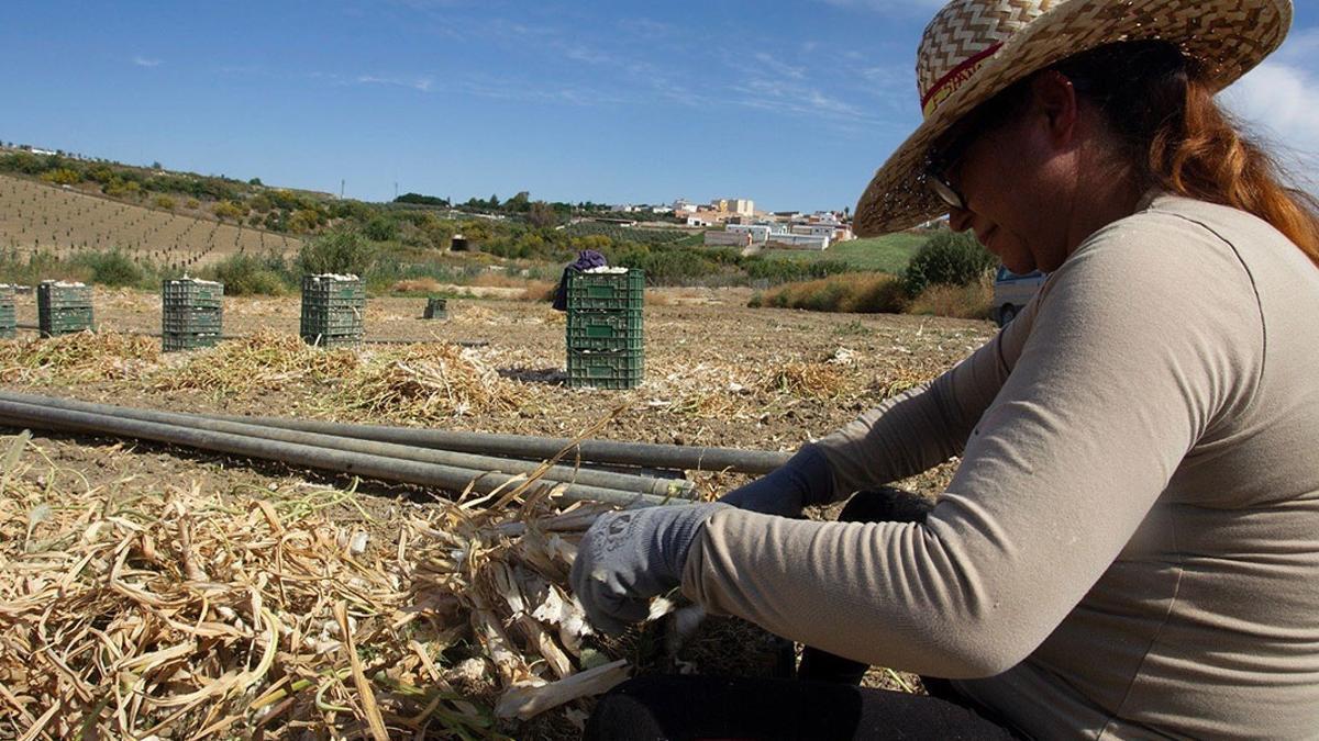 jornaleroajo - Una jornalera recogiendo ajo.