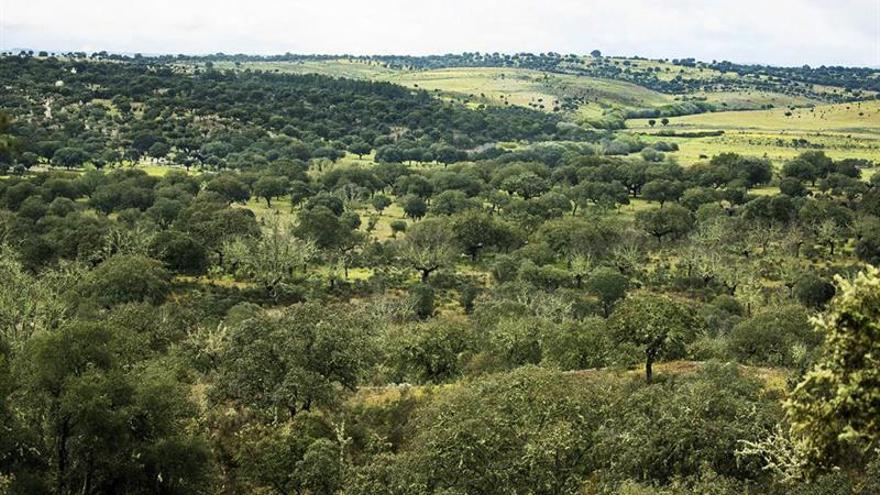 Naturaleza y Hombre, 25 años sembrando conciencia ambiental en Europa