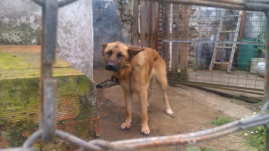 Las protectoras de animales de Cantabria piden acoger a animales abandonados durante el temporal