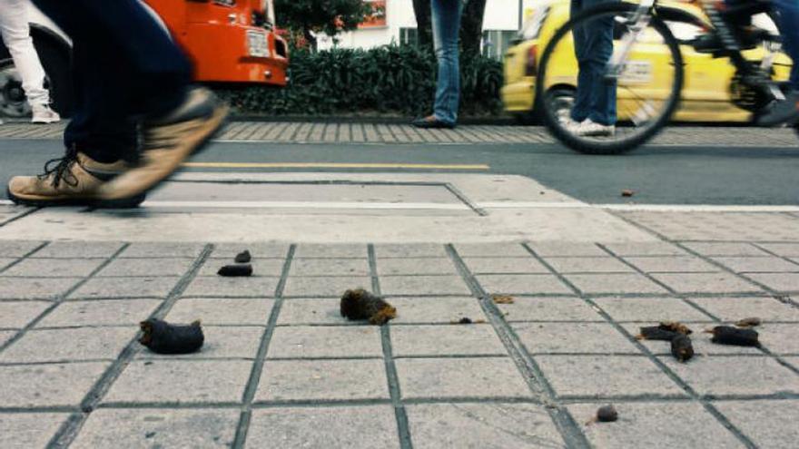 Excrementos de perros en la vía pública
