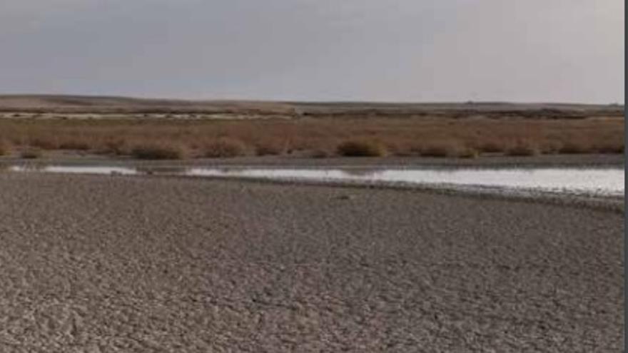 Las consecuencias de la sequía, en una imagen del último informe de Greenpeace