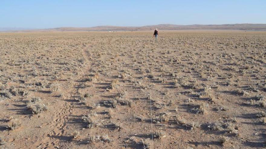 Imagen de un ecosistema árido en el Desierto de Namibia. Autor: Martin Handjaba.