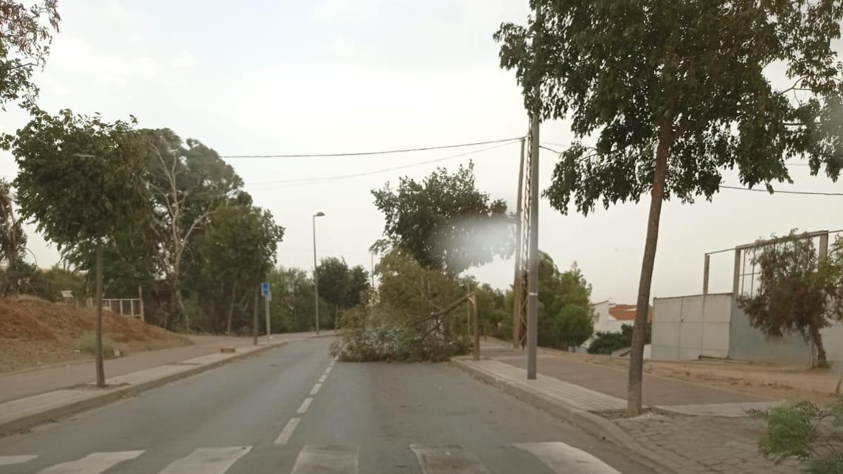 Caída de un árbol en Peñarroya.