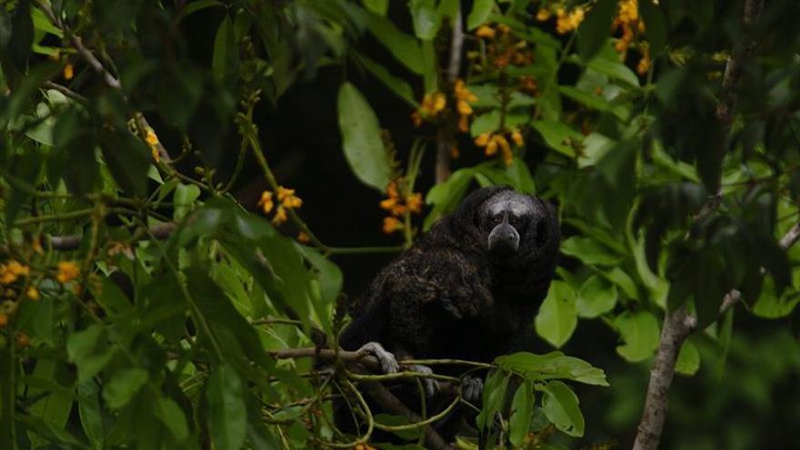 Una serie muestra la biodiversidad en las zonas afectadas por el conflicto en Colombia