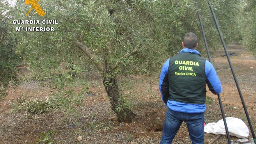 Helicópteros contra el robo de aceitunas: descubren a siete personas con más 1.600 kilos