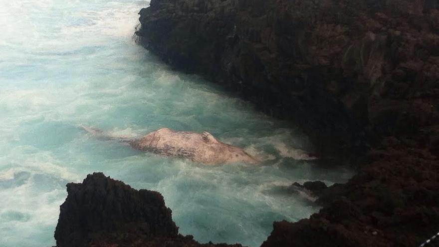 La zona donde se encuentra el cachalote (en la imagen) en la costa de Barlovento, ha sido acordonada.