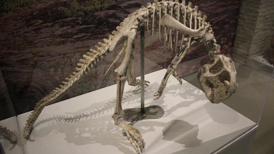 Una de las piezas expuestas en el Museo de Ciencias Naturales de Zaragoza.