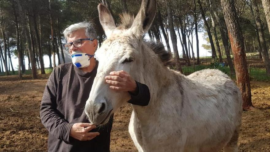 Fotografía facilitada por la Asociación para la Defensa del Borrico (Adebo) de su presidente Pascual Rovira en su reserva de Rute (Córdoba).