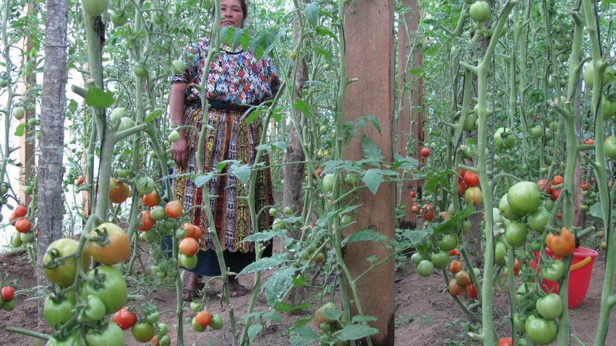 Un proyecto desarrollado por la ONG Mugarik Gabe en Guatemala.