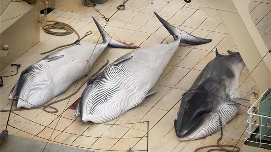 Sea Shepherd denuncia una matanza de ballenas en zona protegida de Antártida