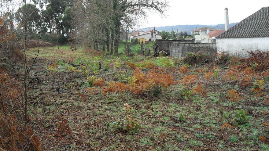 Ames ha aprobado la plantación de más de 4.200 árboles caducifolios alrededor de las casas