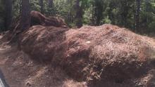 La pinocha sigue atiborrando las cunetas en Tenerife, pese al aviso de limpieza del Cabildo