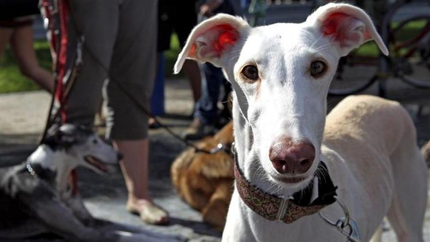 Se refuerzan los derechos de los animales en la Región de Murcia