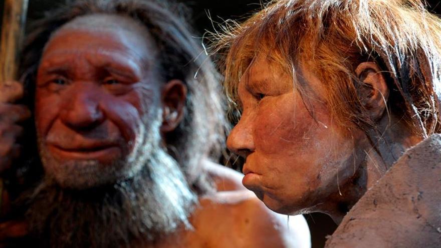 Descubren la primera evidencia de canibalismo neandertal del norte de Europa
