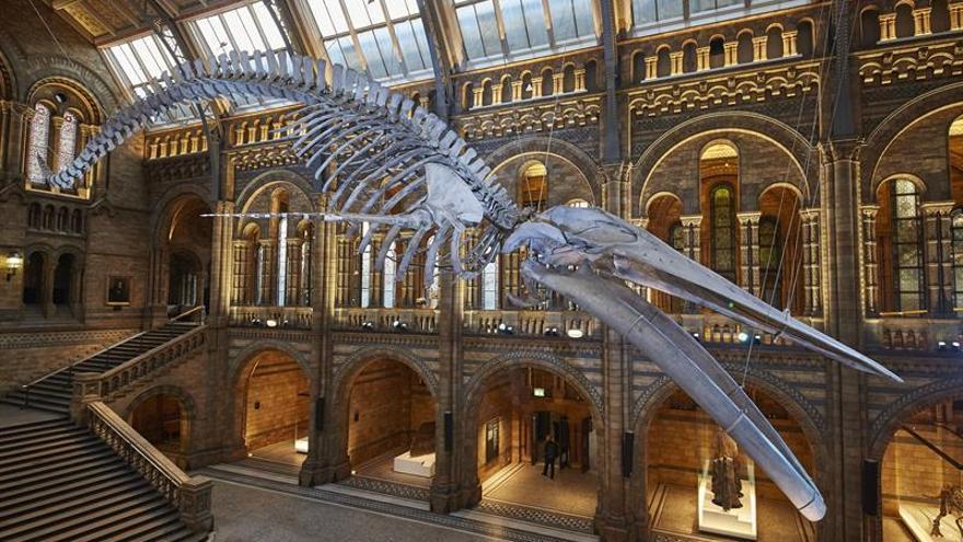 Una gran ballena ocupa la entrada del Museo de Historia Natural de Londres