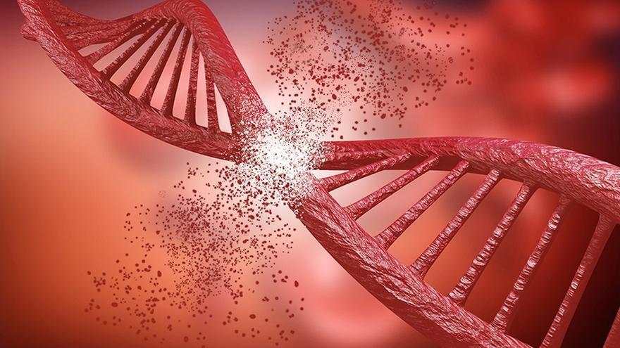 Científicos de la US identifican un nuevo mecanismo de reparación de roturas del ADN