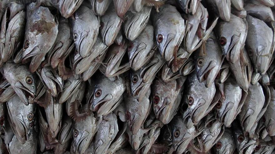 La Agencia Tributaria inicia una operación contra las ventas de pescado en negro
