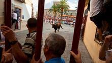 otro de los momentos de los toros de Coria en el encierro / http://turismoextremadura.com/