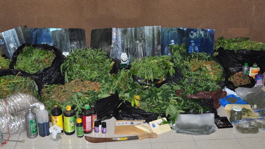 Desmanteladas tres plantaciones de marihuana en Maspalomas.