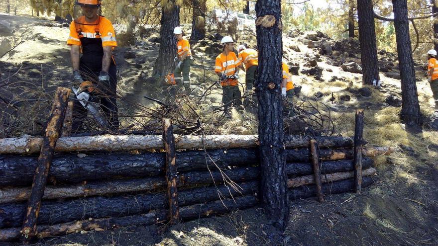 Ya se han empezado a desarrollar es restaurar los ecosistemas afectados por el incendio. Foto: Consejería de Política Territorial.