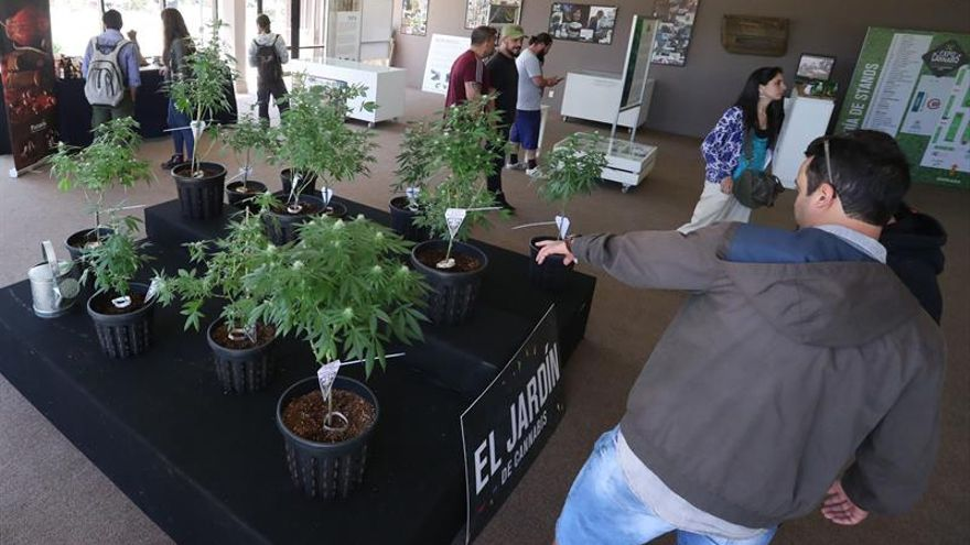 Argentina colaborará con una empresa canadiense en el estudio del cannabis medicinal