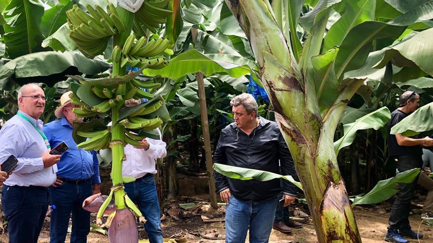 Visita de productores de plátano de Canaria a una finca de de banana de Costa Marfil.