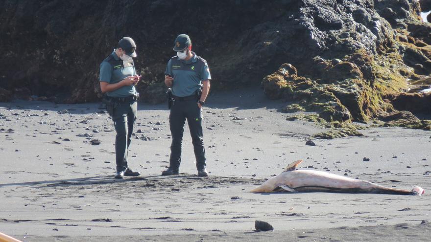Agentes de la Guardia Civil junto al delfín varado en Los Cancajos.