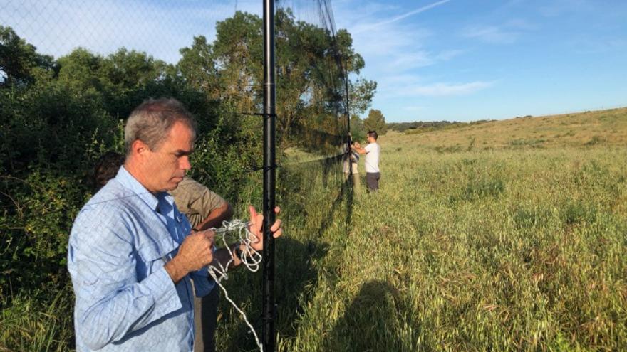 Investigadores de la Universidad de Extremadura han identificado por primera vez en gorriones comunes de Europa una especie de malaria tropical proveniente de África