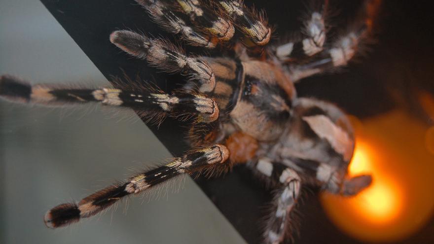 Muestra Arañas y Escorpiones en la Casa de la Ciencia / Alejandro Ávila