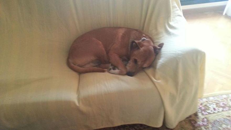 Excálibur, el perro de la enfermera infectada de ébola. / Asociación Protectora Villa Pepa
