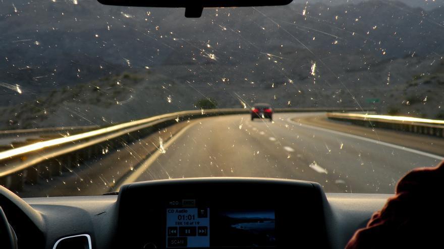 Insectos en el parabrisas de un coche.