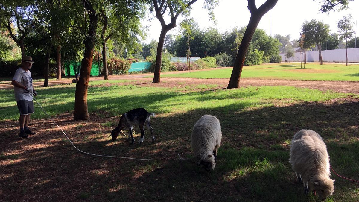 Pepe Serrano, junto a dos de las ovejas y la cabra Pepa.