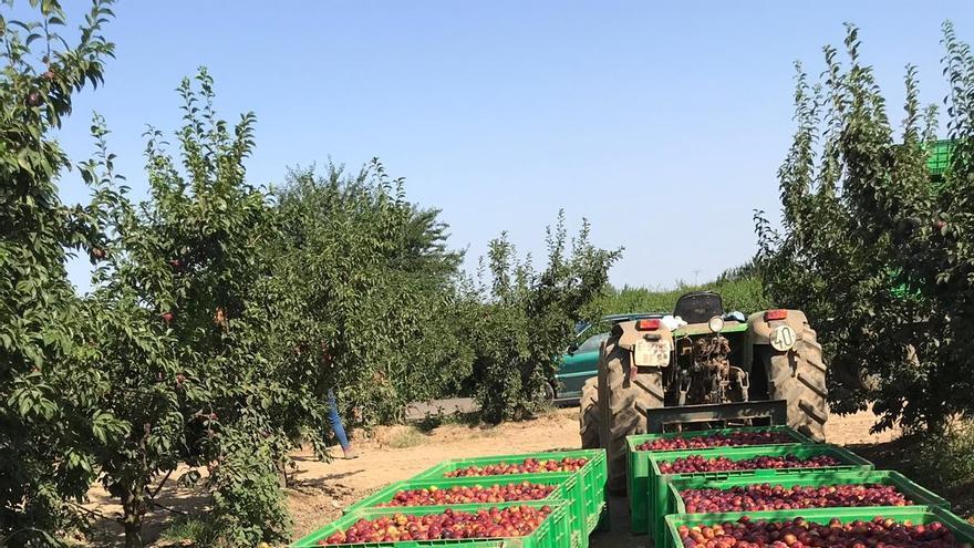 Fruta recien recolectada de los árboles