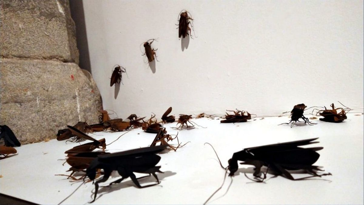 Las cucarachas pueden transmitir a las personas numerosas enfermedades, a través de las distintos tipos de bacterias, virus u hongos, de las que son portadoras