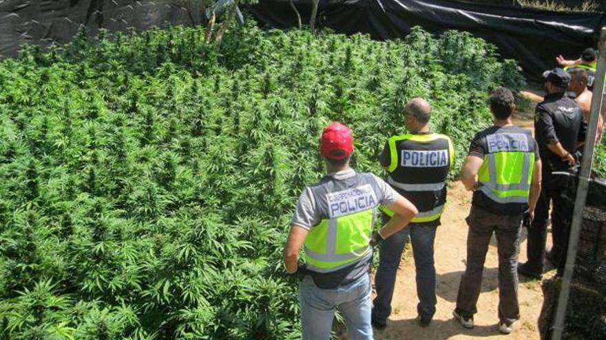 Marihuana decomisada por la Guardia Civil en Alcalá de Guadaira (Sevilla)