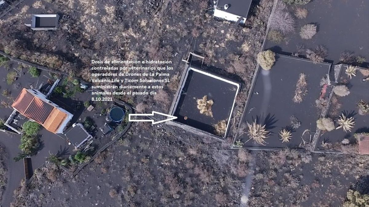 Una de las zonas donde dos empresas de La Palma están llevando  agua y comida  con un dron a los animales atrapados en Todoque