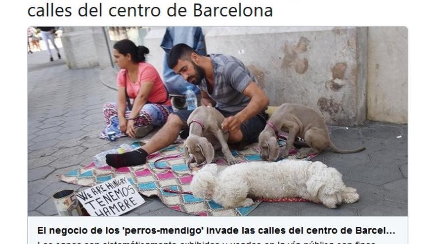 perros mendigo