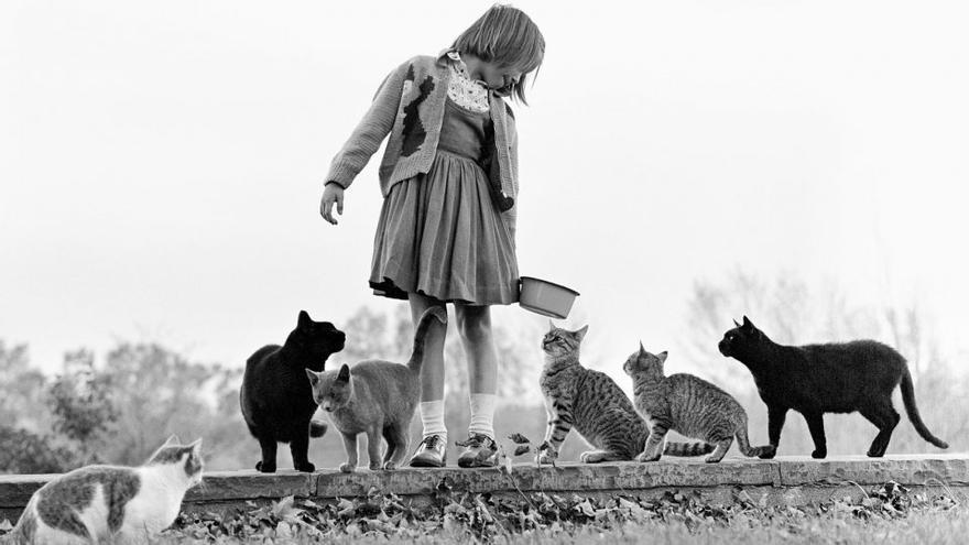 María, la hija de Walter Chandoha, alimenta a una familia de gatos. Nueva Jersey,  1962.