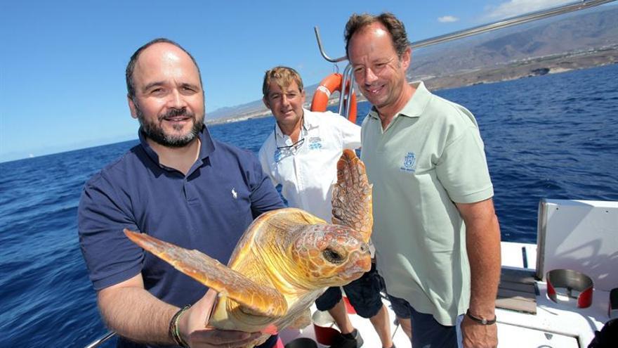 Ejemplar de tortuga boba devuelto al mar en Costa de Adeje