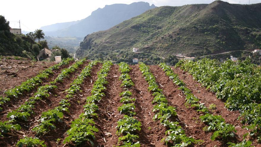 Plantación agrícola en Gran Canaria