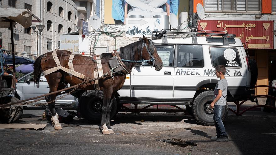 Un caballo en una calle de Palestina