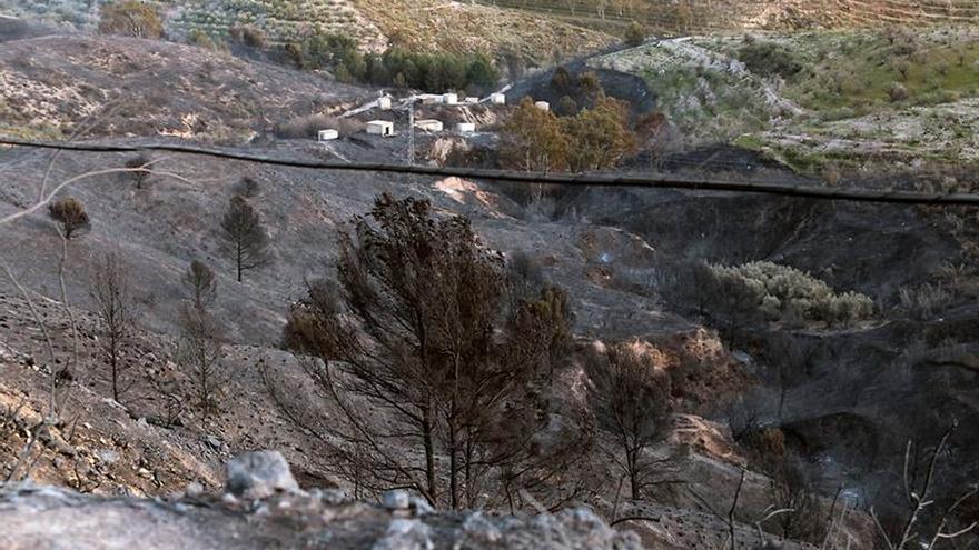 Una asociación de bomberos pide convertir los bosques quemados en cementerios