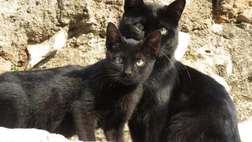 Dos gatos, en la antigua colonia del Templo Romano de la esquina de Capitulares y la calle Claudio Marcelo.
