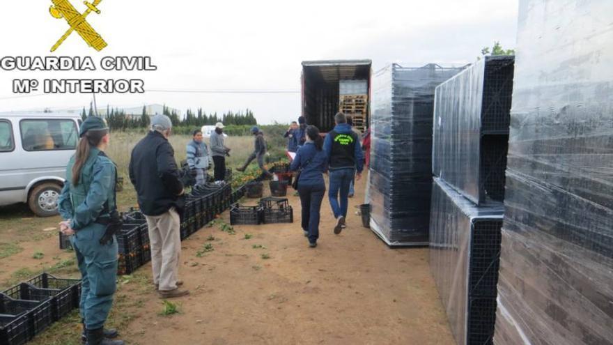 Imagen de una intervención de la Guardia Civil en un robo en un campo valenciano