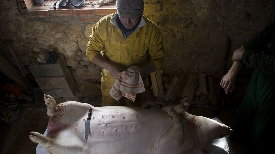Matanza del cerdo en Palencia. Foto: Tras los Muros